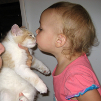 toddler kissing Siberian kitten