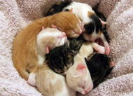 candy bar kittens just born