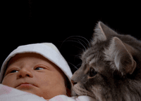 family Siberian cat with newborn