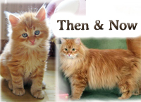 how our kittens look when they grow up